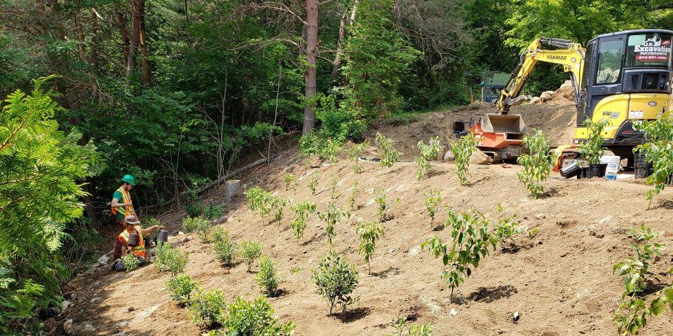 Aménagement des berges - phytotechnologie plantation