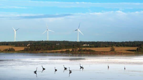L'étude d'impact environnemental afin de cibler et évaluer les risques de répercussions environnementaux d'un projet