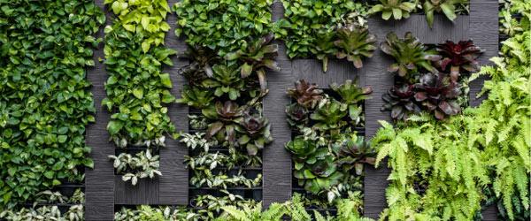 Mur végétalisé intérieur contribue à la purification de l'air ambiant de votre environnement intérieur